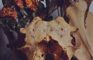 Animal skull on witches altar or shrine. Flowers. Still life.