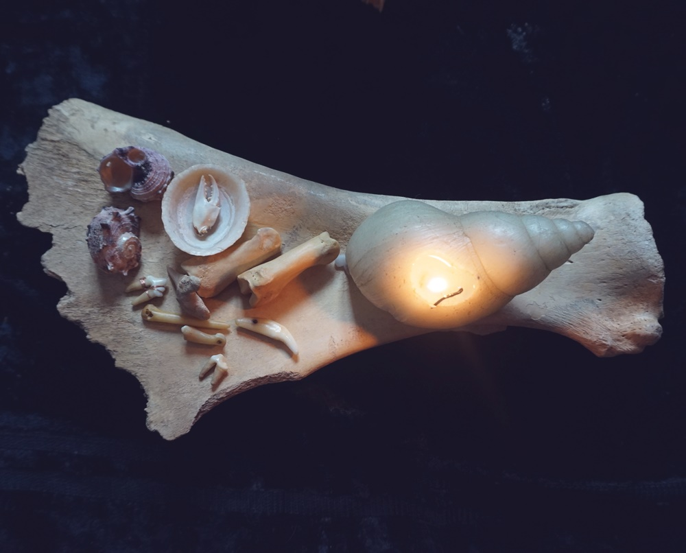 Bone magick accessories: fangs, sea shells, crab claw and bones.