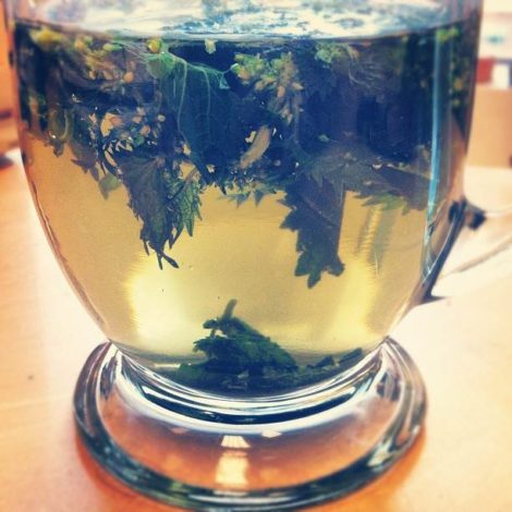 Infusion of nettle leaves in bowl with hot water.